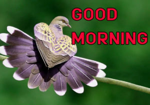 Latest HD Good Morning Images Pictures Free Download