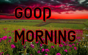 Latest HD Good Morning Images Photo for Whatsapp