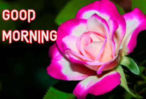 Good Morning Images Photo With Flower