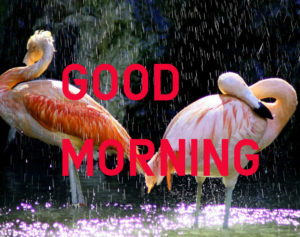 Latest HD Good Morning Images Wallpaper Pic for Facebook