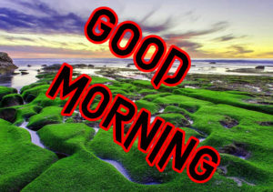 Latest HD Good Morning Images Wallpaper HD