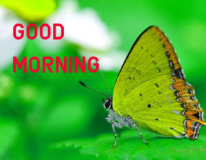 Latest HD Good Morning Images Wallpaper pictures for Facebook