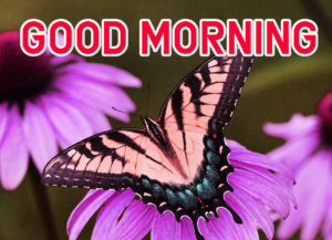 Latest HD Good Morning Images Pics Pictures Download