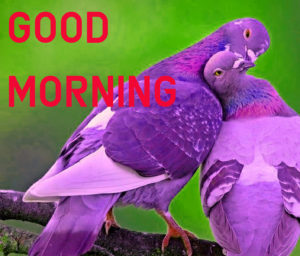 Latest HD Good Morning Images Wallpaper Pic Download