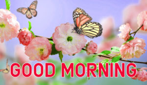 Latest HD Good Morning Images Pic Wallpaper HD