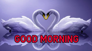 Latest HD Good Morning Images Wallpaper Download