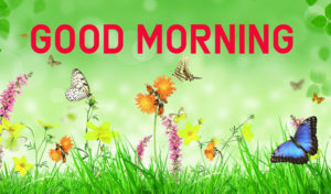 Latest HD Good Morning Images Photo
