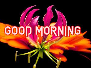 Good Morning Images Pics Photo