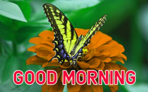 Latest HD Good Morning Images pics Free Download