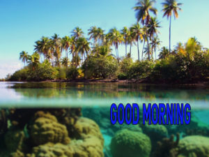 Good Morning Images pic Wallpaper free Download