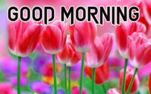 Good Morning Images Walpaper pictures Free Download