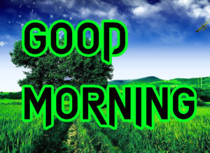Latest HD Good Morning Images Wallpaper free Download