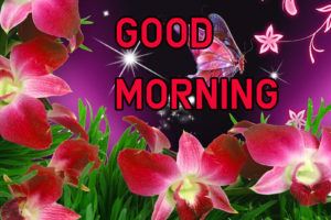 Latest HD Good Morning Images Pics for Whatsapp