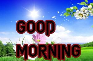 Latest HD Good Morning Images Pics Wallpaper New Best