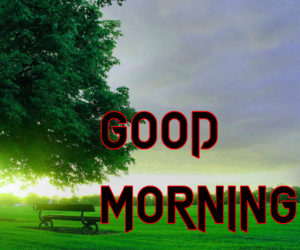 Latest HD Good Morning Images Pics pictures Free