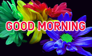 Latest HD Good Morning Images Pic With Flower
