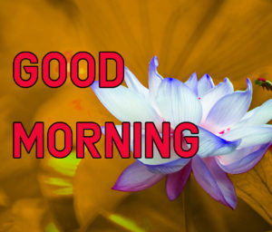Latest HD Good Morning Images Pic Download