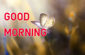 Latest HD Good Morning Images Wallpaper Pics Free