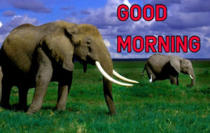 Latest HD Good Morning Images Photo Download