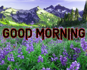 Happy Good Morning Images  photo pics download