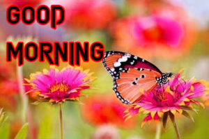 Happy Good Morning Images photo pics for friend