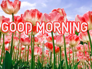 Happy Good Morning Images wallpaper for facebook
