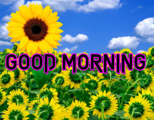 Happy Good Morning Images  wallpaper photo picture download