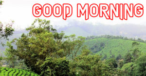 good Morning Images picture photo download