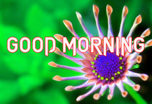 good Morning Images picture download