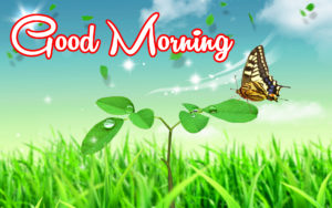 Happy Good Morning Image wallpaper photo free hd