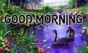 New Good Morning Images wallpaper photo for whatsapp