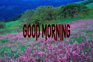 New Good Morning Images wallpaper for facebook
