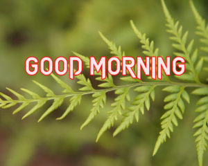 New Good Morning Images  wallpaper photo download