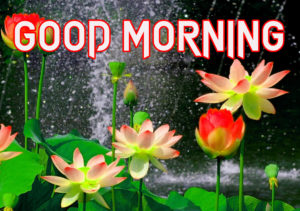 New Good Morning Images  picture photo download