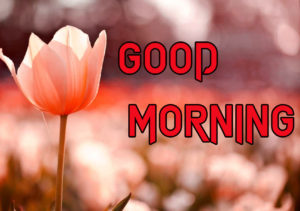 New Good Morning Images wallpaper for whatsapp