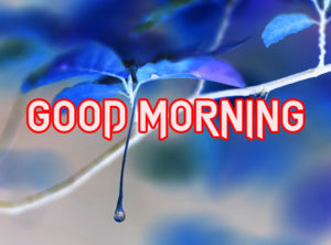 New Good Morning Images photo picture download