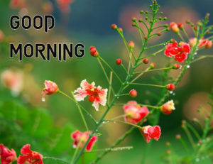 Good Morning Images Photo Free Download