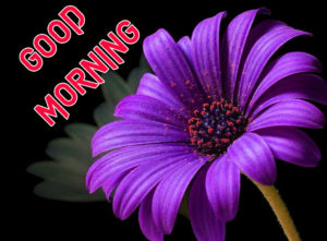 Good Morning Images Wallpaper Free Latest