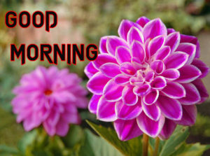 Good Morning Images Wallpaper With Beautiful Flower