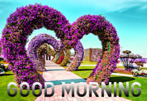 Good Morning Images Wallpaper Photo Download for Whatsapp