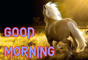 Happy Good Morning Images Wallpaper Free Download