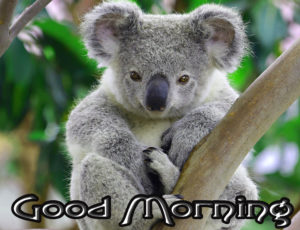 Good Morning  Images Pics Free Download for Animal Lover Free
