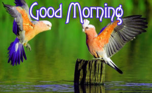 Good Morning  Images Wallpaper Pics Download for Facebook