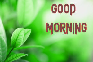 Latest Free Good Morning Wishes Images Pictures Free Download
