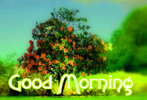 Good Morning Images Pics Pictures Download & Share