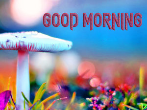Latest Free Good Morning Wishes Images Photo Free Download