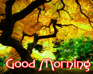 Beautiful Good Morning Wishes Images Wallpaper Pics Photo