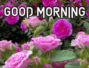 Sister Good Morning Images  wallpaper whatsapp