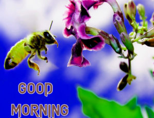 Latest Free Good Morning Wishes Images Wallpaper Download & Share