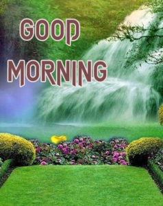 Latest Free Good Morning Wishes Images Pics HD